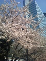 ソナーポケット 公式ブログ/すっかり春ですね! 画像1