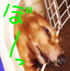 中村純子 公式ブログ/おっさんがレンタルできるらしい…  画像1