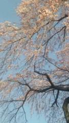 中村純子 公式ブログ/やっと春(;∇;)梅と枝垂れ桜 画像3