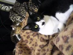 中村純子 公式ブログ/ネコ科柄に猫☆ 画像3