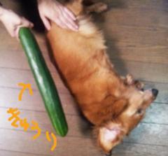 中村純子 公式ブログ/ぐるなびの漫画が面白かった(^^【田中圭一のペンと箸−漫画家の好物−】 画像3