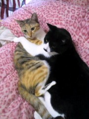 中村純子 公式ブログ/ネコ科柄に猫☆ 画像2