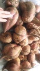 中村純子 公式ブログ/サツマイモ収穫〜(^^)/ 画像1