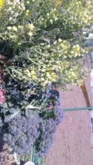 中村純子 公式ブログ/水菜の花 画像2