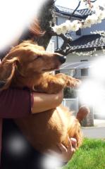 中村純子 公式ブログ/追記…春のご挨拶(^^) 画像1