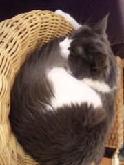 中村純子 公式ブログ/猫欠乏症と猫猫写メ 画像1