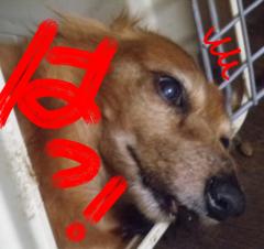 中村純子 公式ブログ/おっさんがレンタルできるらしい…  画像3