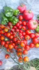 中村純子 公式ブログ/猛烈モスキート攻撃と収穫 画像2