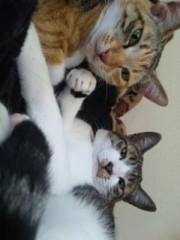 中村純子 公式ブログ/梅雨明けと猫写メ 画像1