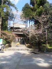 中村純子 公式ブログ/鎌倉桜1…ちょっと咲いてた( ~っ~)/ 画像3
