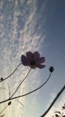 中村純子 公式ブログ/牛フン堆肥と秋の空〜♪ 画像2