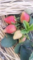 中村純子 公式ブログ/甘酸っぱい収穫は…まだ3つ 画像1