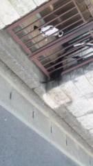 中村純子 公式ブログ/トイレは道向こうなのニャ 画像3