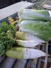 中村純子 公式ブログ/畑フィーバー☆収穫祭り☆たんと盛り 画像1