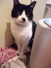中村純子 公式ブログ/ベタ猫 画像1