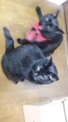 中村純子 公式ブログ/クロネコとアシスタント 画像3