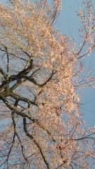 中村純子 公式ブログ/やっと春(;∇;)梅と枝垂れ桜 画像2