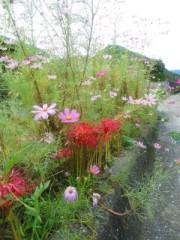 中村純子 公式ブログ/秋の花(≧ω≦)b 画像1