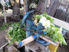 中村純子 公式ブログ/畑フィーバー☆収穫祭り☆たんと盛り 画像3