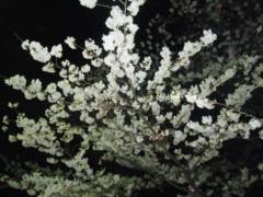 楠真由美 公式ブログ/夜桜 画像1