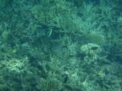 光宣 プライベート画像/小浜の海中 P8260466