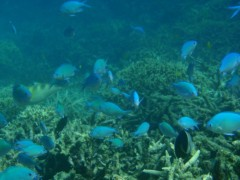 光宣 プライベート画像/小浜の海中 P8260468