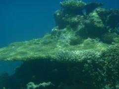 光宣 プライベート画像/舟浮イダの浜 海中 P8230339