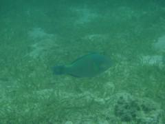 光宣 プライベート画像/舟浮イダの浜 海中 P8230353