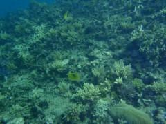 光宣 プライベート画像/小浜の海中 P8260479