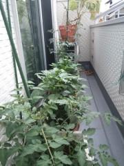 光宣 公式ブログ/ベランダ菜園 画像1
