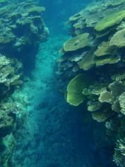 光宣 公式ブログ/海に行きたい! 画像1