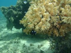 光宣 プライベート画像/舟浮イダの浜 海中 P8230327