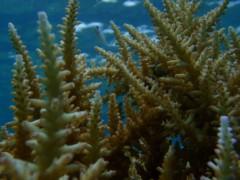 光宣 プライベート画像/舟浮イダの浜 海中 P8230343