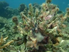 光宣 プライベート画像/舟浮イダの浜 海中 P8230322