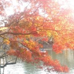 光宣 公式ブログ/紅葉狩り 画像1