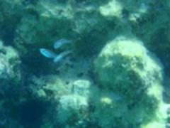 光宣 プライベート画像/小浜の海中 P8260461