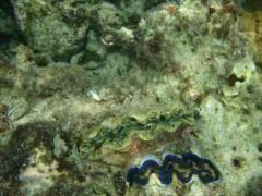 光宣 プライベート画像/舟浮イダの浜 海中 P8230321