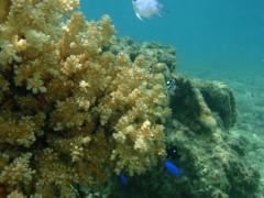 光宣 プライベート画像/舟浮イダの浜 海中 P8230329
