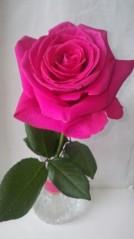 吉田麻梨紗 公式ブログ/薔薇ってとっても素敵( ´艸`) 画像1