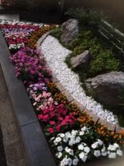 吉田麻梨紗 公式ブログ/お花 画像1