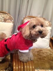 岡田はるこ 公式ブログ/☆メリークリスマス☆ 画像3