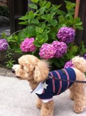 岡田はるこ 公式ブログ/紫陽花とココ♪ 画像1