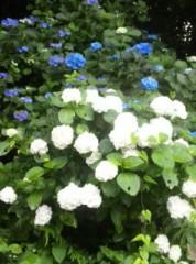 岡田はるこ 公式ブログ/鎌倉ランチ 画像3