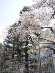 岡田はるこ 公式ブログ/今日は… 画像1