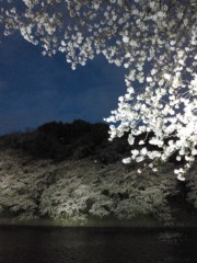 岡田はるこ 公式ブログ/夜桜♪ 画像1