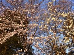 つばさ 公式ブログ/Everyday、カチューシャ☆〜(ゝ。∂) 画像3