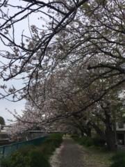 つばさ 公式ブログ/日曜の仕事終わりに〜つば散歩♪ 画像1