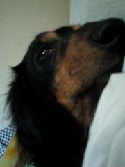 玉澤誠 公式ブログ/実家の愛犬 画像1