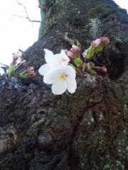 長澤奈央 公式ブログ/4月になりました! 画像1