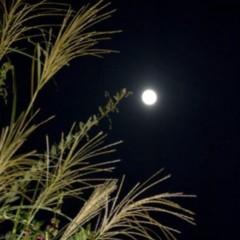長澤奈央 公式ブログ/お月見。 画像2